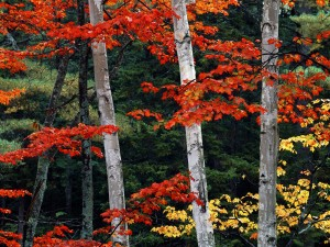 Ramas cubiertas de hojas otoñales