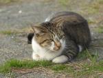 Bonito gato descansando
