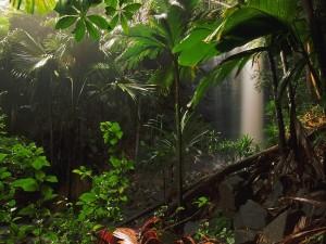 Cascada en la jungla