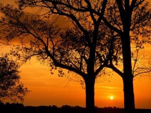 Sol entre dos árboles