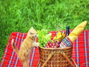 Gatito mirado la cesta de picnic