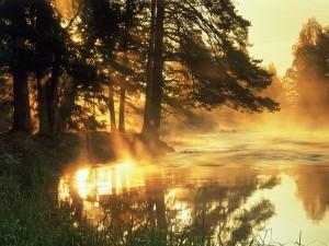 Río iluminado por el sol