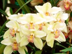 Hermosas orquídeas blancas