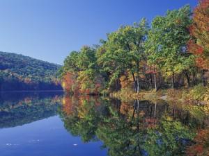 Árboles reflejados en el lago