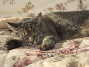 Un gato dormido
