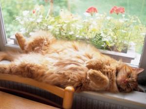 Gato durmiendo junto a la ventana