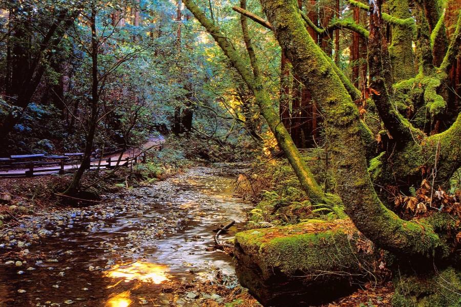 Un frondoso bosque