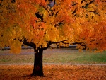 Belleza de otoño con hojas color naranja
