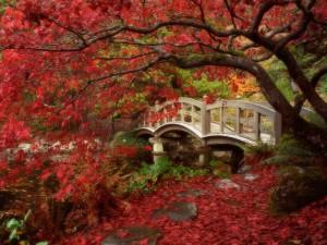 Puente en un bonito jardín japones