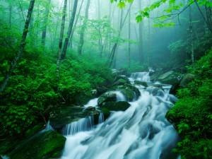 Río fluyendo en un bosque verde