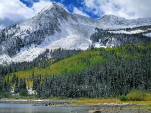 Bosque bajo la montaña