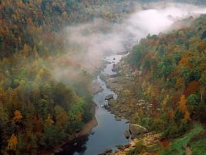 Niebla en otoño sobre un río