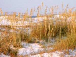 Plantas sobre las dunas