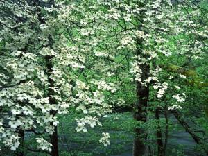 Árboles en flor junto a un río