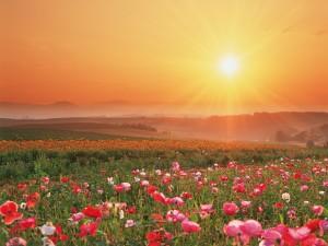 Hermoso amanecer sobre un campo de flores