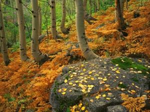 Helechos otoñales en el bosque