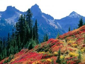 El otoño llega a las montañas