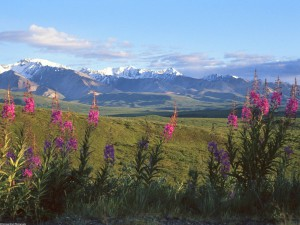 Vista de las montañas