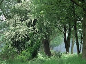 Árboles frondosos en el bosque