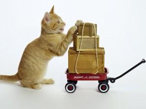 Gato transportando unas cajas