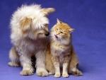 Gato y perro mirándose