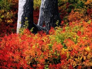Arbustos otoñales