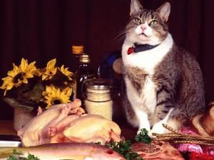 Gato junto a la comida