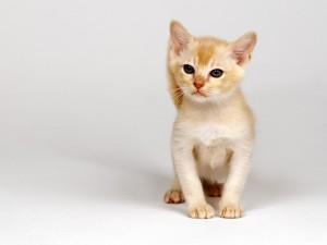 Un pequeño gato sentado
