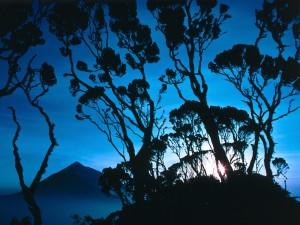 Primeros rayos de sol tras los árboles
