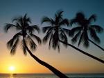 Tres palmeras y el sol