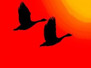 Siluetas de aves iluminadas por el resplandor del sol