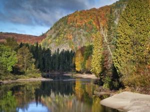 Bosque otoñal a orillas del río