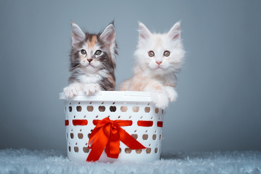 Pareja de gatos en una cesta