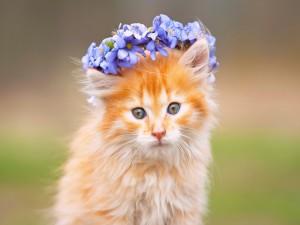 Gatito con una corona de flores