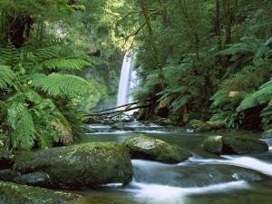 Cascada y río en el interior de un bosque