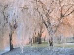 Árboles congelados en invierno