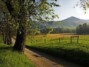 Camino en el campo