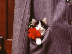 Gatito en el bolsillo de una chaqueta