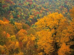 Los colores del otoño en un bosque