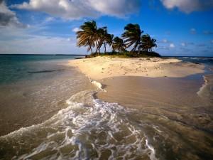 Palmeras en una pequeña isla