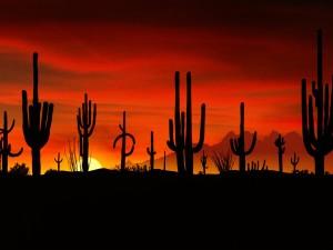 Atardecer en el desierto de Sonora (Arizona)