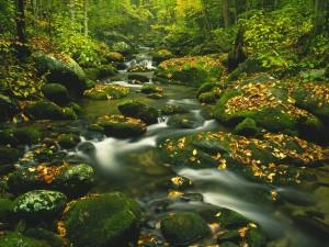 Hojas otoñales en el cauce del río