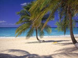 Palmeras en la arena de la playa