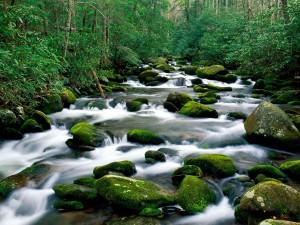Bonito río rodeado de naturaleza