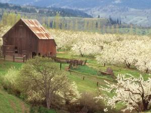 Árboles frutales en el campo