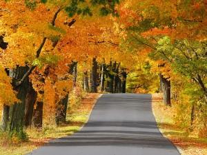 Árboles otoñales en la carretera