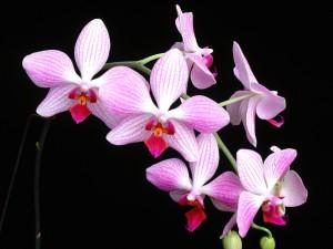 Rama con bonitas orquídeas