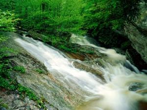 Río entre rocas