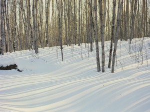 Nieve cubriendo el suelo