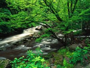 Río entre la verde vegetación